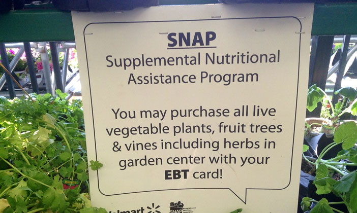 Food Stamp and SNAP Fraud